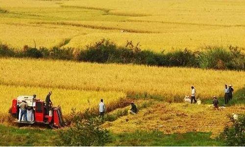 关于农村集体土地征用的