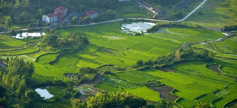農村土地轉讓合同范本