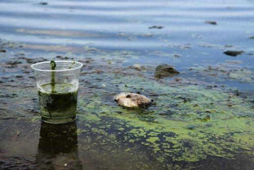 河北博野水污染承擔什么責任